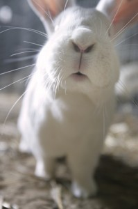 WhiteRabbit